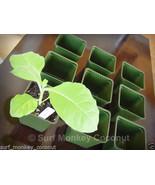 500 Heirloom Tobacco Seeds Starter Kit + Plastic Pots, Plant Labels & Tr... - $6.54+