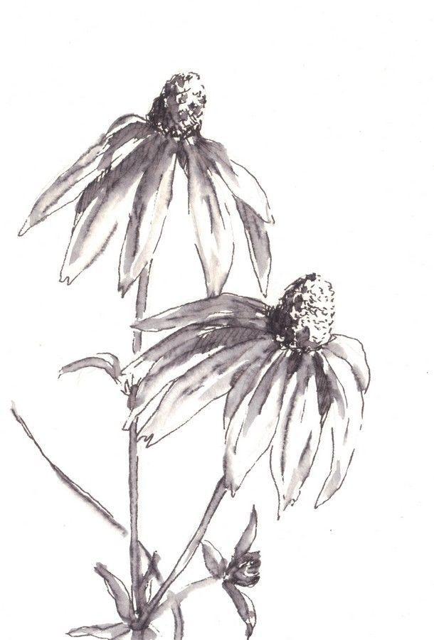 "Akimova: DAISY, ink, black&white, flowers, bouquet, 4""x6"", still life"