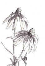 "Akimova: DAISY, ink, black&white, flowers, bouquet, 4""x6"", still life - $6.00"