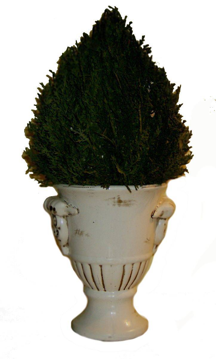 Topiary Preserved Cypress Plant Cottage Chic Floral Home Decor