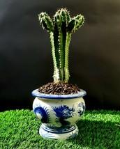 CactiBonsai -  Bonsai An amazing plant - $79.00