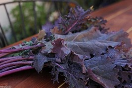 Kale Seeds - 'Red Russian, Highly Nutritious~entire Plant Can Be Used ~1000 Seed - $3.26