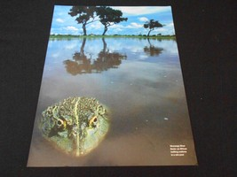 FROGS & TOADS magazine ads/clippings lot **     - $9.74