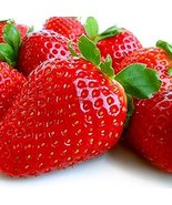 10 Albion Everbearing Strawberry Plants-Large, Sweet Berry - $12.82