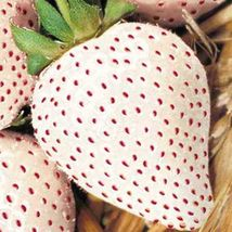 White Soul Strawberry 100 Seeds Perennial Containers Fruit Usa - $9.98