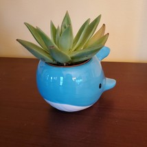 "Ceramic Whale Planter with Succulent, live plant, 4"" blue animal pot, Echeveria image 2"