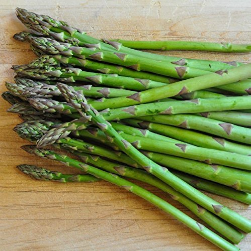 10 Pkg Starter Plant of Jersey Knight Giant Asparagus Plant