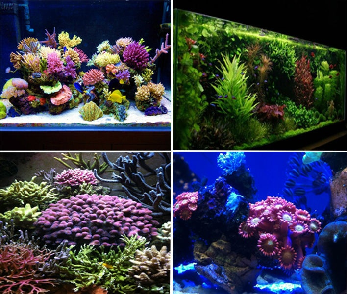 Dimmable 165w led aquarium light full spectrum coral reef for Saltwater fish tank lights