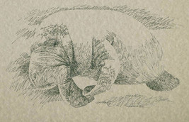 Florida Manatee Art Print #56 By Stephen Kline Drawing From Words Sea Cow Gift - $49.95