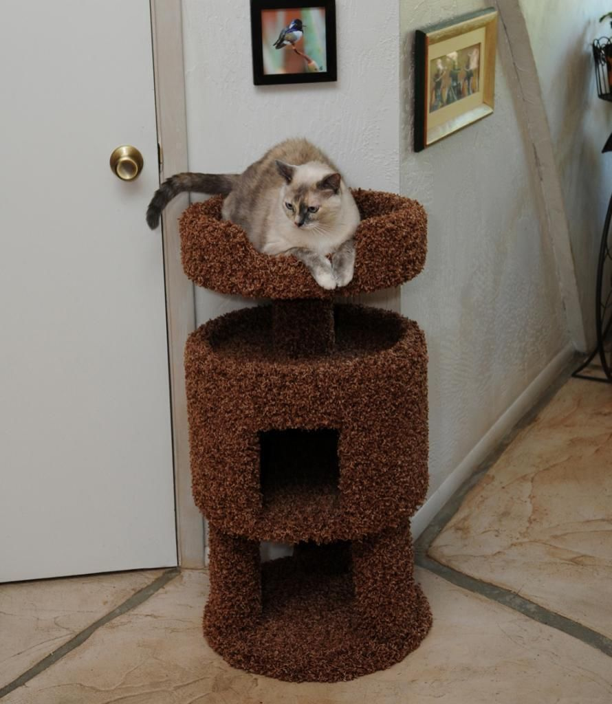 CONTEMPORARY CAT HOUSE - FREE SHIPPING IN THE UNITED STATES ONLY - $125.95