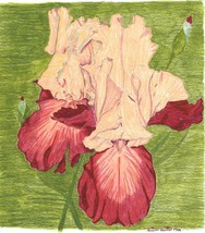 5x7 Orange and Garnet Irises Print Only - $10.00