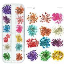 Dry Flowers Nail Art Decorations 3D Natural Daisy Sun Flower - 12 Colors / Box image 4