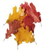 Autumn Colors-Digital Download-ClipArt-ArtClip-Digital Art - $4.00