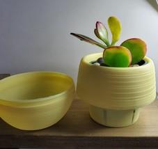 Jade Succulent in Yellow Self-Watering Pot, Live Plant Hummel's Sunset Crassula image 2