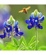 SHIP FROM US 400 Texas Bluebonnet Wildflower Seeds, ZG09 - $28.36