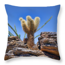 Teddy Bear Cholla, Throw Pillow, fine art, seat... - $41.99 - $69.99