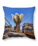 Teddy Bear Cholla, Throw Pillow, fine art, seat cushion, accent, cactus - $41.99+