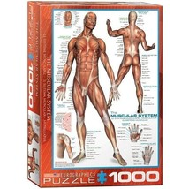 The Muscular System Eurographics 1000 Piece Jigsaw Puzzle - $39.47
