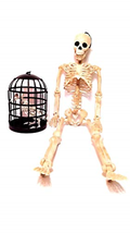 Giant Skeleton with Posable Joints, 35 inches with Raven Skeleton in Bir... - $55.13
