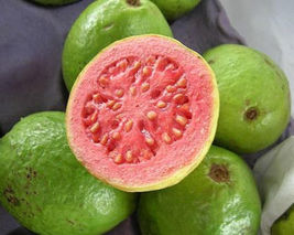GUAVA tropical fruit Psidium guajava exotic tree seed edible guayaba 50 SEEDS - $20.00