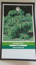 4'-5' BONANZA PEACH Tree New Live Healthy Trees Fruit Garden Plant Home Peaches - $38.21