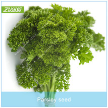 100pcs Parsley Seed Vegetable Seeds Bonsai Plants For Home Garden Fruit ... - $2.18