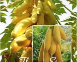 1   copy thumb155 crop