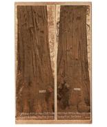 Vintage Postcard Giant & Jumbo  Big Tree Grove Santa Cruz California K3 - $11.63