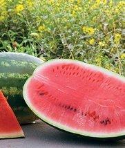 HeirloomSupplySuccess 25 Heirloom All Sweetness Watermelon seeds  - $3.99