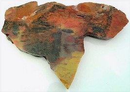 Petrified Wood 9 Specimen Slab Cabbing Rough - $4.60