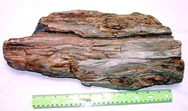 Petrified Wood - Large Chunk near 15 Pounds - $135.00