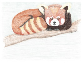 8x10 Red Panda Print Only - $15.00