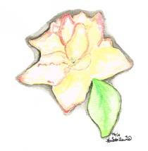 8x10 Red Tipped Rose Print Only - $15.00