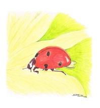 11x14 Ladybug Print Only - $20.00