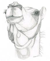 Camel head thumb200