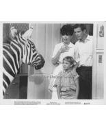 Zebra in the Kitchen Jay North Davis Green 8x10 Photo - $6.99