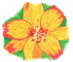 16x20 Orange Tiger Lily Print Only - $30.00