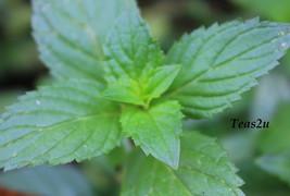 Teas2u Organic Peppermint Pleaser™ Loose Leaf Herbal (Caffeine Free) – 3.53 oz. - $13.95