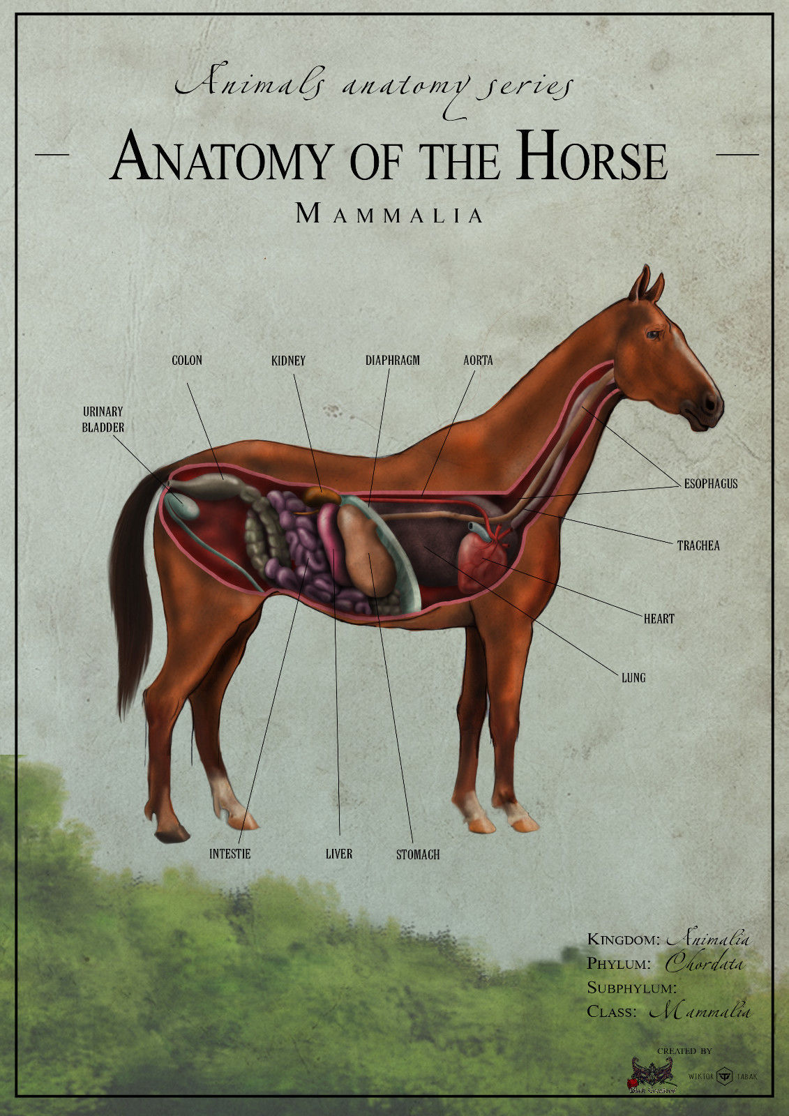 The Horse Anatomy Biology Poster Canvas Art And 50 Similar Items