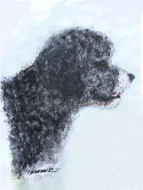 Portuguese Water Dog Print - $50.00
