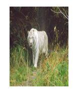 Wildcats 13--Digital Download-ClipArt-ArtClip-Digital Art - $4.00