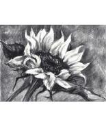 Akimova: SUNFLOWER, flower, charcoal, chalk - $15.00