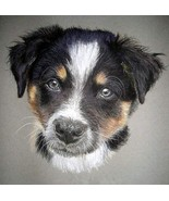 Border Collie Dog Portrait Matted Art Print - 5 in x 7 in Design - 8 in ... - $6.99