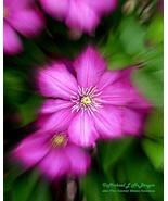Clematis focal zoom hrw1 32x43 watermark cfz14   copy thumbtall