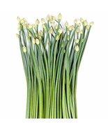 200 Seeds Garlic Chive Seeds, Herb, Allium Tuberosum, Heirloom, NON-GMO - $5.76