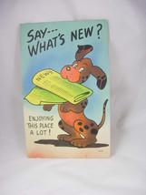 Colourpicture Comic Dog Vintage Postcard Comedy Cartoon WWII Era Used Introducti - $45.00