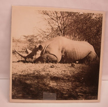Early Safari Photo of a Rhinoceros Hunting - $45.00