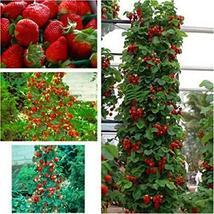 Strawberry Seeds 1,200 Seeds Outdoor Living Yard Garden TkForever - $49.50