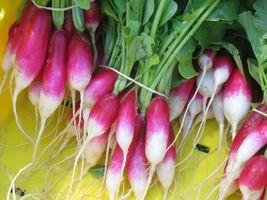 9 Variety Seeds - French Breakfast Radish Fast Harvest Seeds #IMA59 - $12.99+