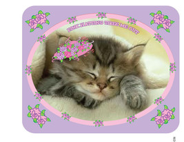 """LAVENDER T-SHIRT """"PINK HATTING TIRES ME OUT""""  FOR PINK HAT CAT LADIES OF... - $18.74"""